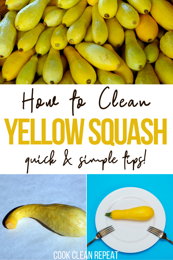 Learning how to clean squash is easy and quick. You can use yellow squash in a variety of recipes! Check out how to clean yellow squash below for tips, tricks, and frequently asked questions.