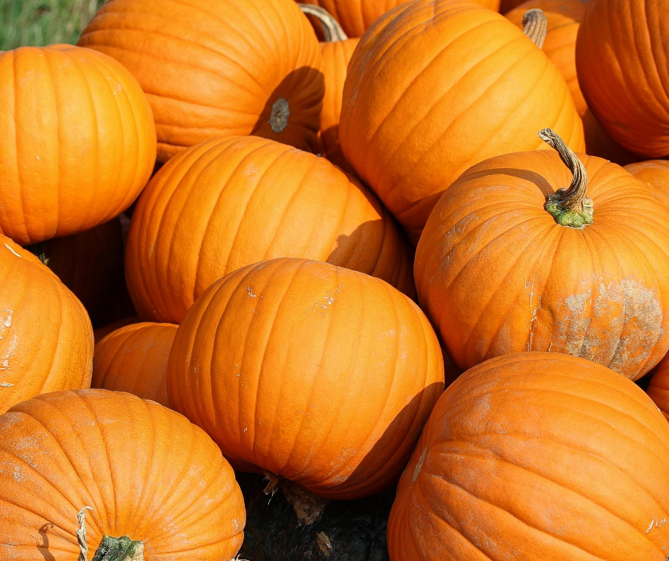 A pile of bright orange pumpkins
